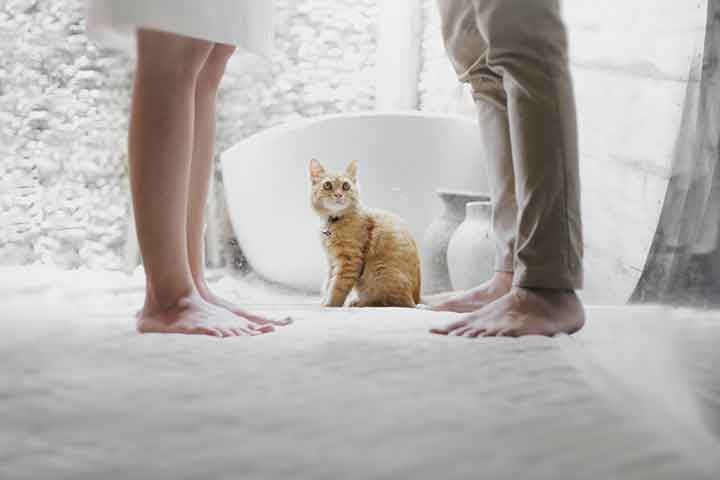 pet friendly custom home